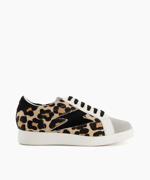 ENERGISED - Leopard